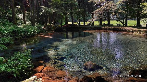 陣の池の水源「小池」の湧水 1
