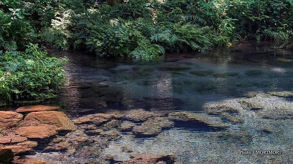 陣の池の水源「小池」の湧水 2