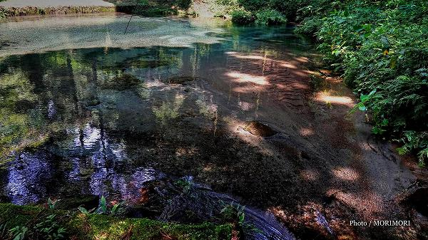 陣の池の水源「小池」の湧水 3