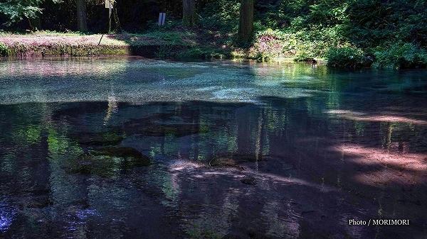 陣の池の水源「小池」の湧水 4