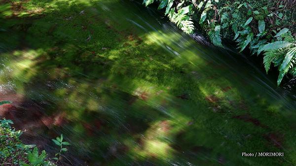 小池から陣n池への水路