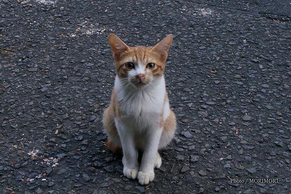 KIRISHIMAヤマザクラ宮崎県総合運動公園 猫 8