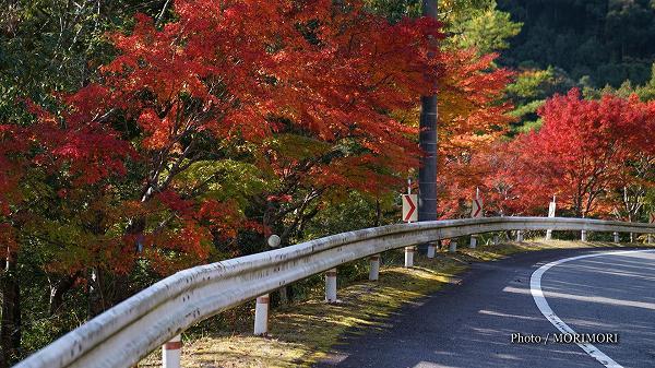 国道沿いの紅葉
