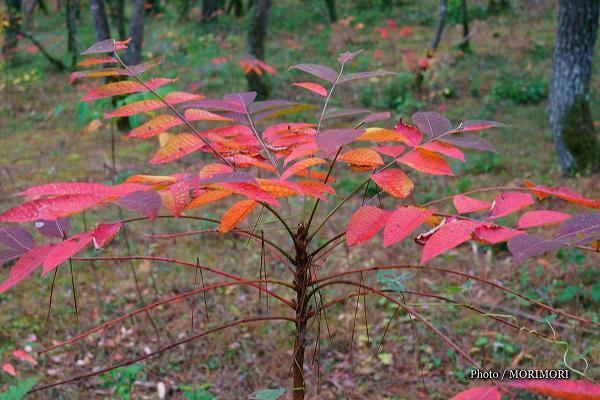 宮崎市 市民の森の秋 ハゼ