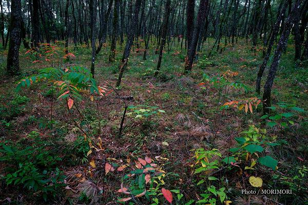 宮崎市 市民の森の秋