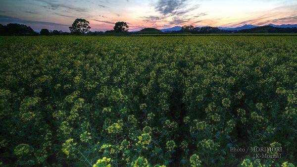 西都原古墳群の夕景と菜の花