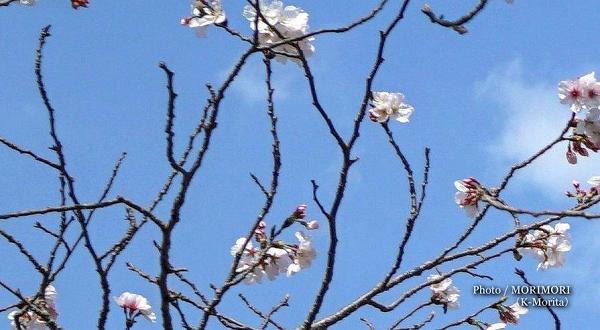 (拡大)花芽が少ない印象