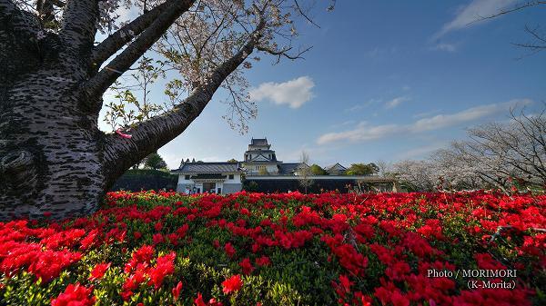 天ケ城公園の桜とツツジ