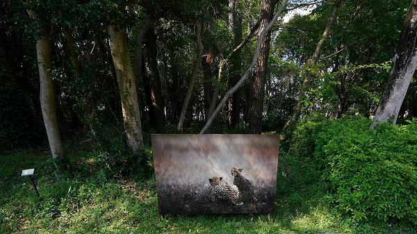 「野外写真展」ねこ科 岩合光昭写真展