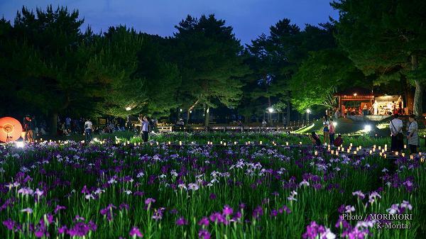 宮崎市市民の森 ハナショウブ ライトアップ 1