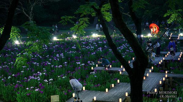 宮崎市市民の森 ハナショウブ ライトアップ 2