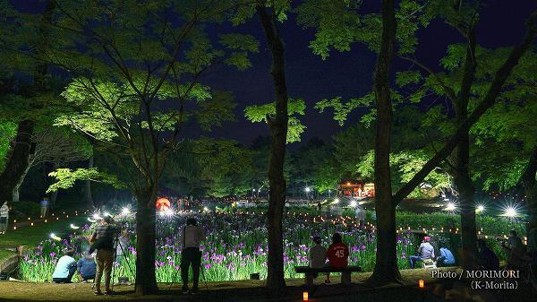 宮崎市市民の森 ハナショウブ ライトアップ 3