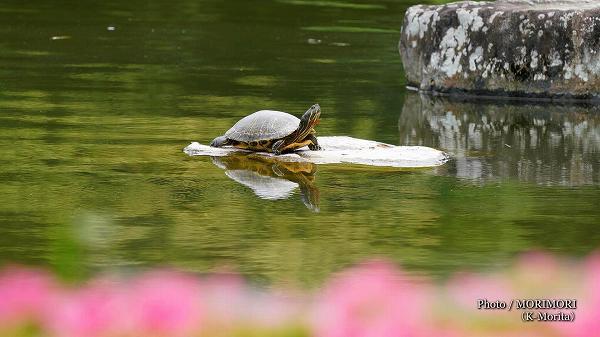 カメ(宮崎県総合運動公園)