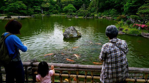 コイ(宮崎県総合運動公園)