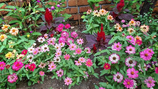 花づくり見本園にて 色とりどりの花