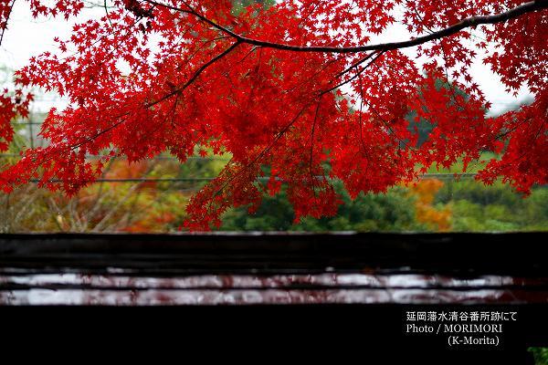 延岡藩水清谷番所跡の紅葉(日向市東郷町)