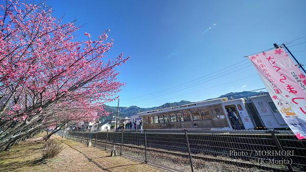 北郷駅 早咲き桜「日南寒桜一号」とJR九州「海幸山幸」