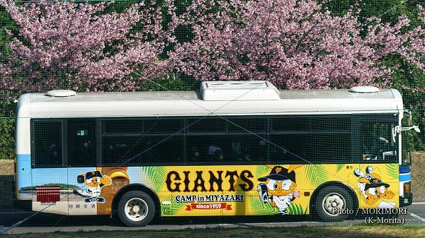 河津桜とシャトルバス(宮崎県総合運動公園にて)