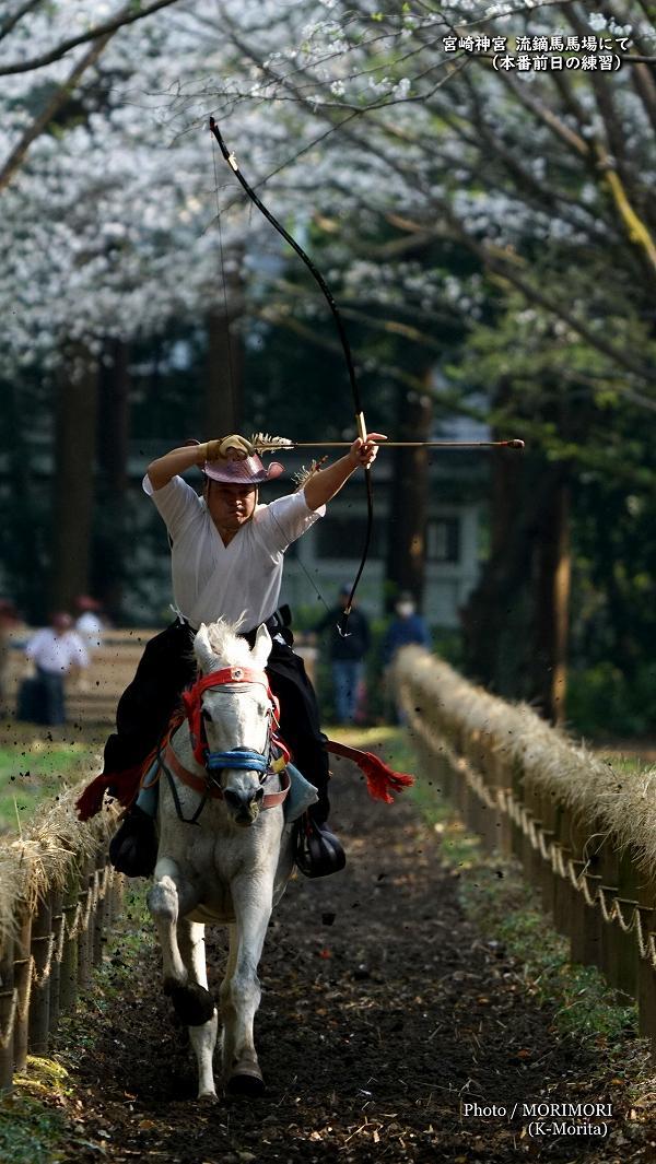 宮崎神宮 流鏑馬馬場の桜と流鏑馬練習風景