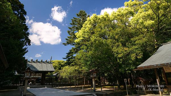 新緑の宮崎神宮 2