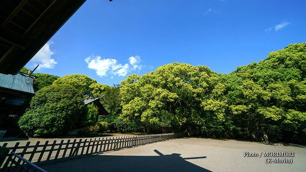 新緑の宮崎神宮 5