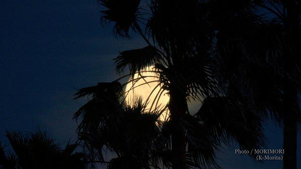 月 フラワームーン