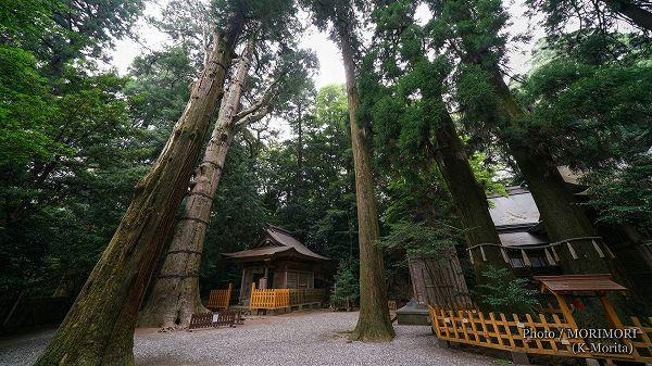 高千穂神社 境内の巨樹