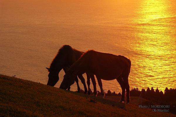 都井岬 御崎馬と志布志湾の夕景