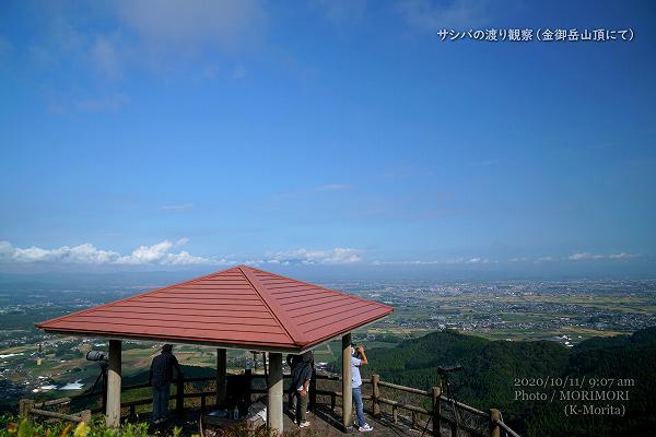 金御岳山頂東屋でサシバ観察する方々