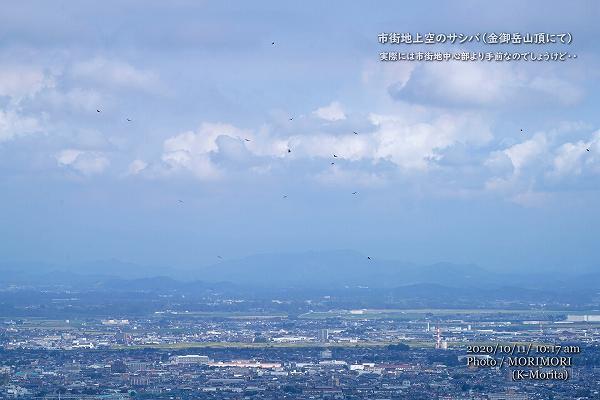 都城市街地を背景にサシバが上昇(金御岳山頂にて)