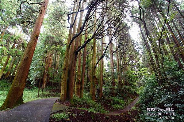 槵觸神社(くしふる神社)杉の巨木