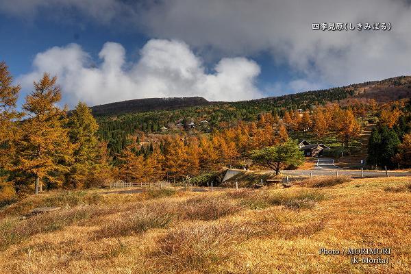 奥に見えるのが「四季見原すこやかの森キャンプ場」
