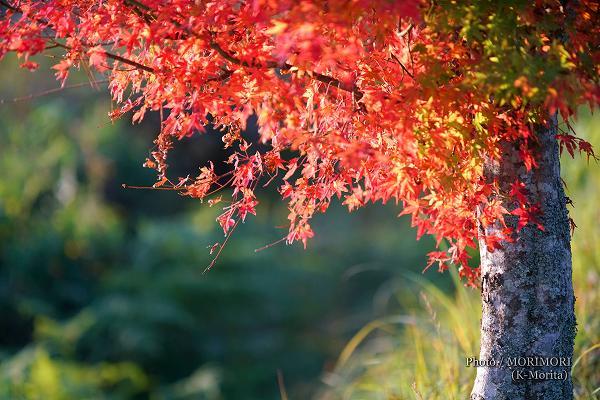 紅葉もだいぶ色付く 国見ヶ丘にて