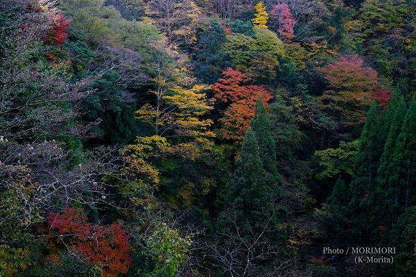国見ヶ丘より見た下の山の紅葉