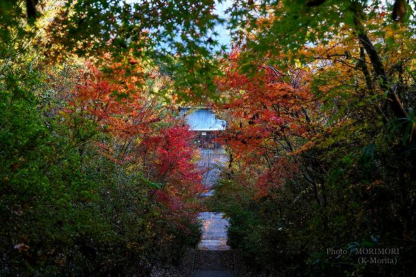 ところどころ紅葉も 高千穂 国見ヶ丘にて