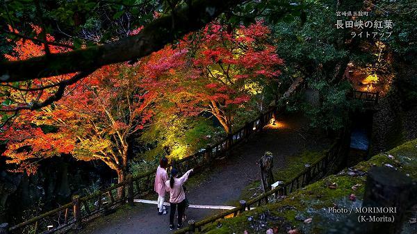長田峡の紅葉ライトアップ 1