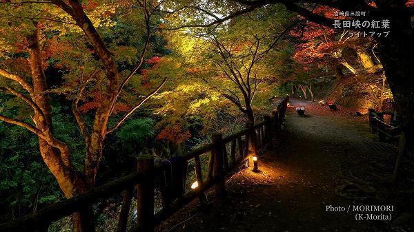 長田峡(三股町)  紅葉ライトアップ 4
