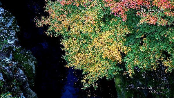 長田峡の紅葉
