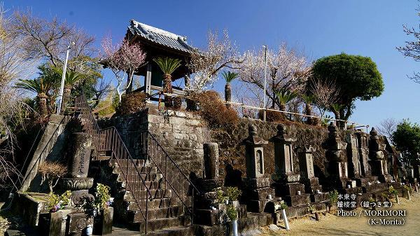 本東寺鐘つき堂と梅