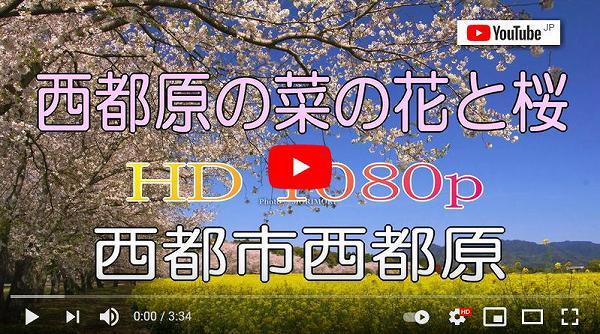 西都原古墳群の菜の花と桜(Youtube)
