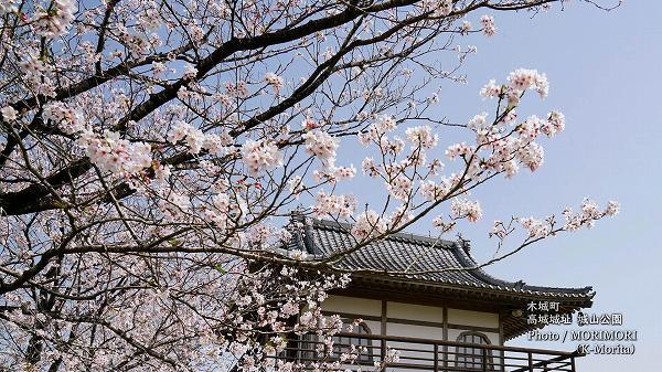 木城町 高城城址 城山公園の桜