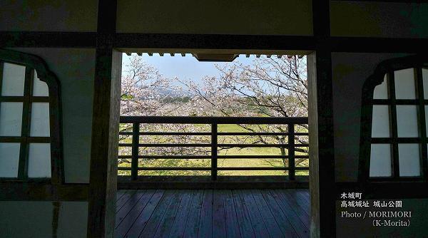 木城町 高城城址 城山公園の桜 5