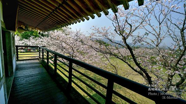 高城城址 城山公園メロディー時計台より見た桜