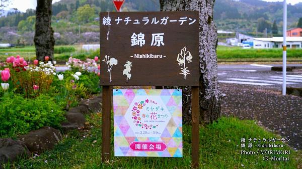 「ミヤザキ春の花まつり」綾ナチュラルバーデン 錦原