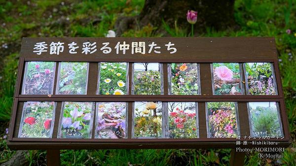 綾 ナチュラルガーデン 錦原に咲く花 1