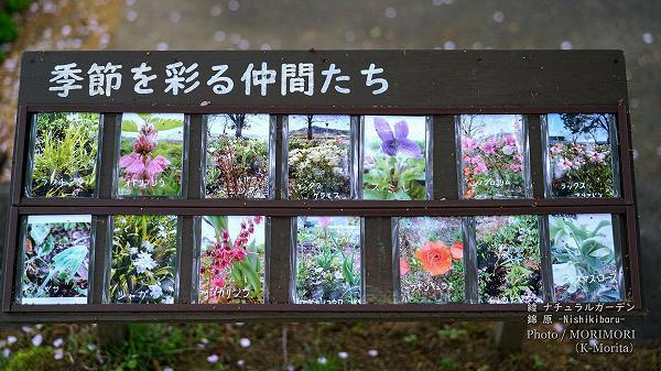 綾 ナチュラルガーデン 錦原に咲く花 2