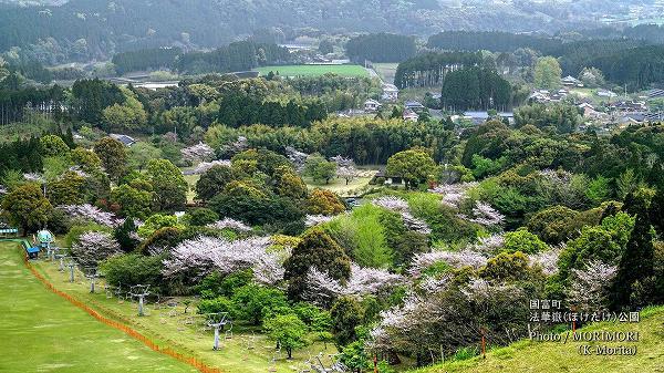 2021年法華嶽公園の桜