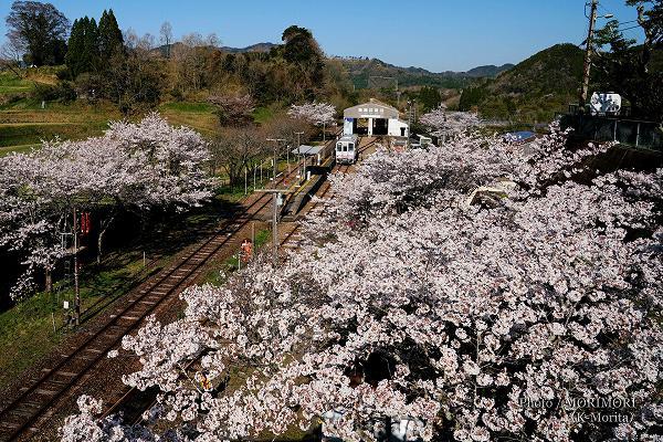 桜咲く 高千穂駅