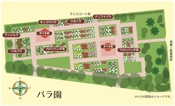 ひなた宮崎県総合運動公園  バラ園レイアウト図(公式サイトより)