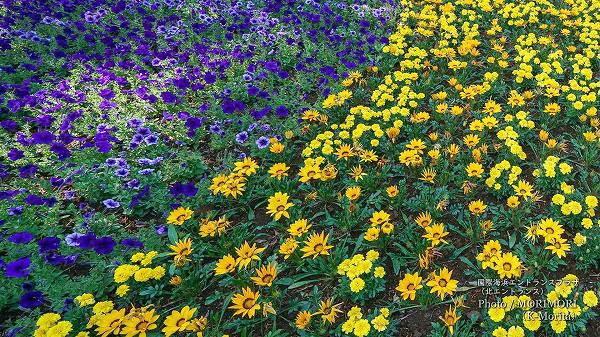 国際海浜エントランスプラザ 北エントランス花壇 6